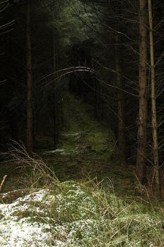 Auchenroddan Forest