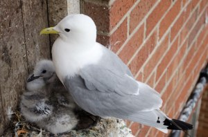 seagull-and-chicks