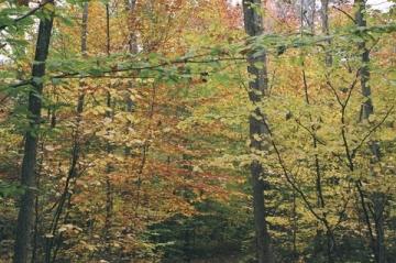 Autumn Colors, Nova Scotia