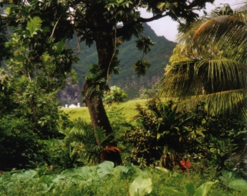 Rainforest_Fatu_Hiva