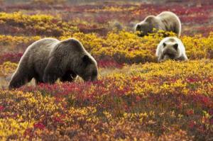 Photo: wilderness.org