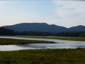 Tidal-Marsh
