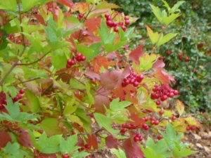 Autumn_Berries
