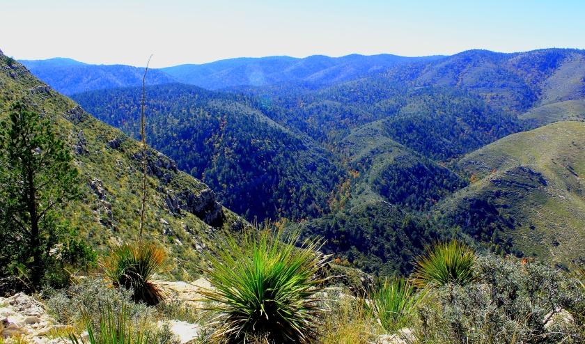 Guadalupe range
