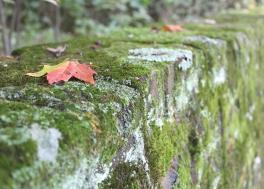 leaf on CCC wall