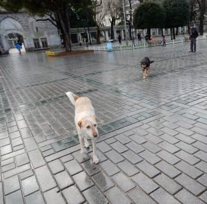 Street-dogs-T-300x296