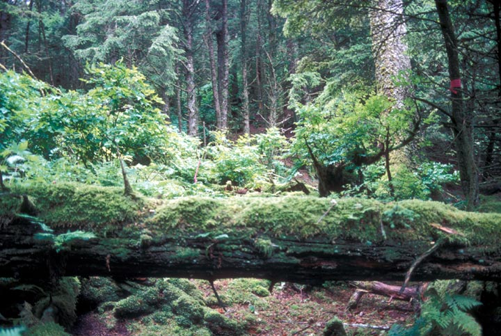 Forrester Island Wilderness in the U.S. state of Alaska. Public Domain photograph of the U.S. Fish and Wildlife Service