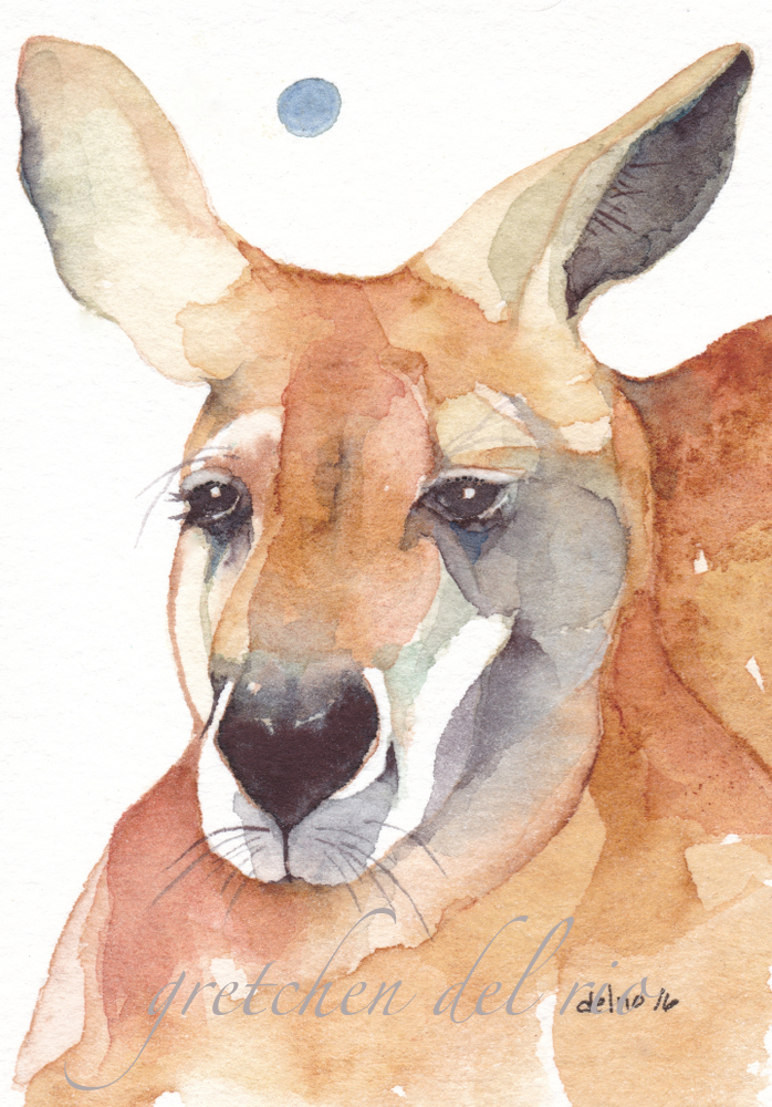 ''RED KANGEROO' 1000 5-2016_20160525_0007