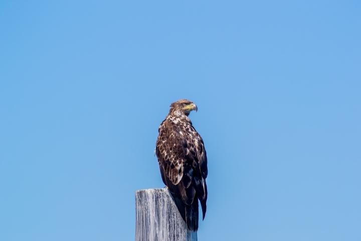 seahawk