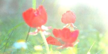 impressionistic-flowers-tw