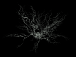 Neuron image: Nicolas P. Rougier