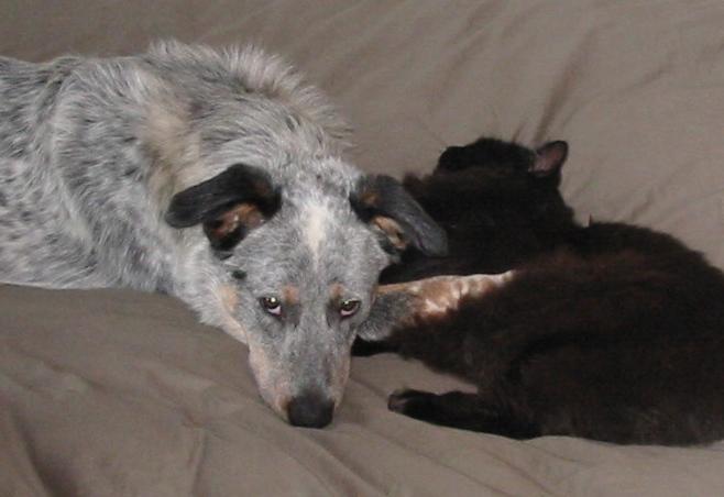 Buddha the Dog and his cat Hari Giri