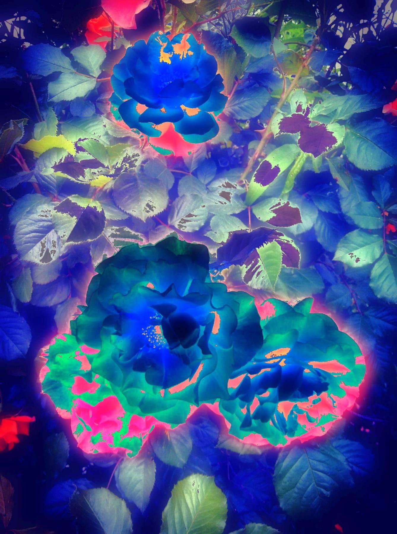 If the roses were blue - Digital Work - Miroslava Panayotova