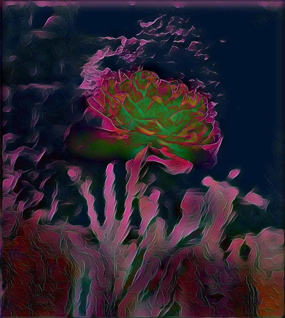 Tulip at Night - Digital Work - Miroslava Panayotova